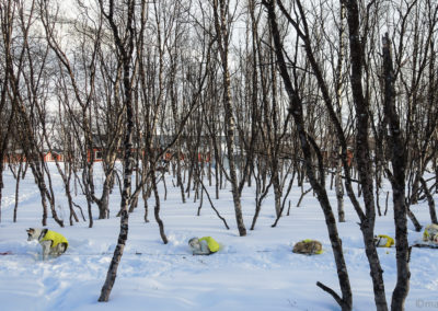 On s'endort avec les hurlements des chiens de traîneaux à Abiskojaure