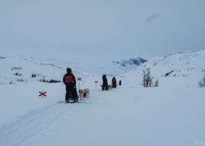 5 traîneaux à chiens en Laponie suédoise