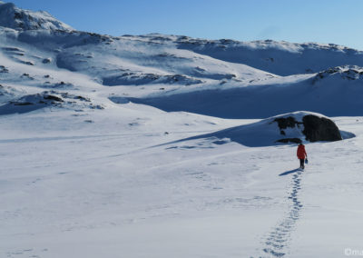 En skis et pulka
