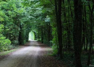 Route du Rhin à vélo